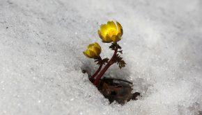 snow-3280728_1920
